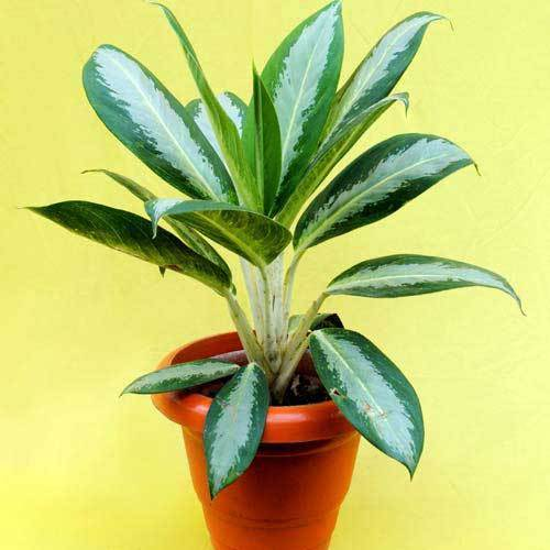 beauteous house plants names. Decorative Plants Indoor Service Provider From Kolkata With Names  Interior Design Ideas