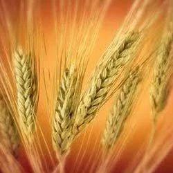 grain insurance co jsc result